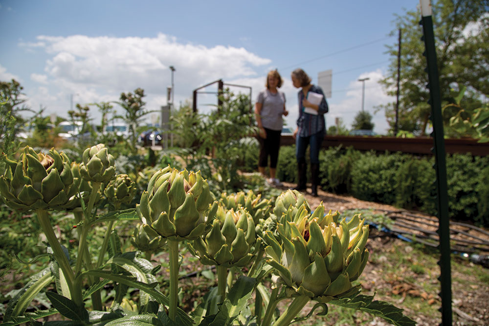 Two women stand behind a planter growing artichokes.